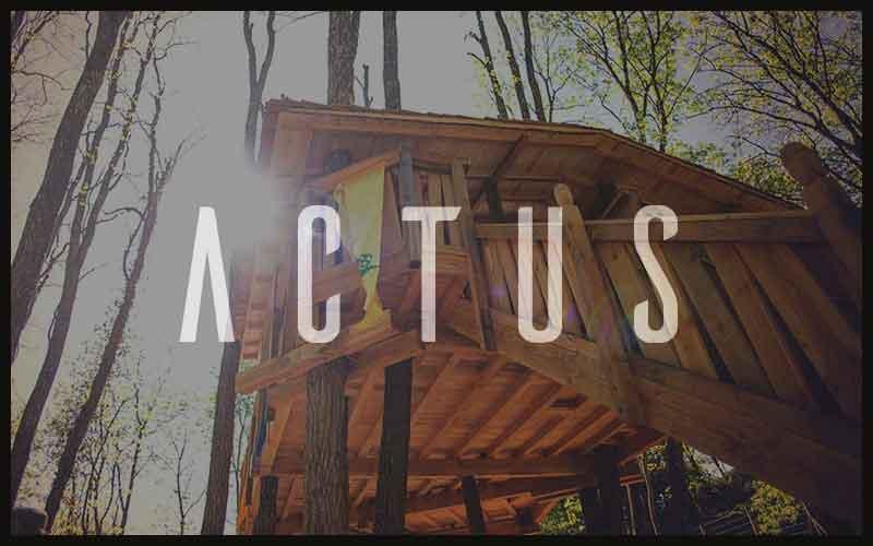 actus-cabane-bois-arbre